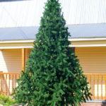 Что собой представляют уличные елки?